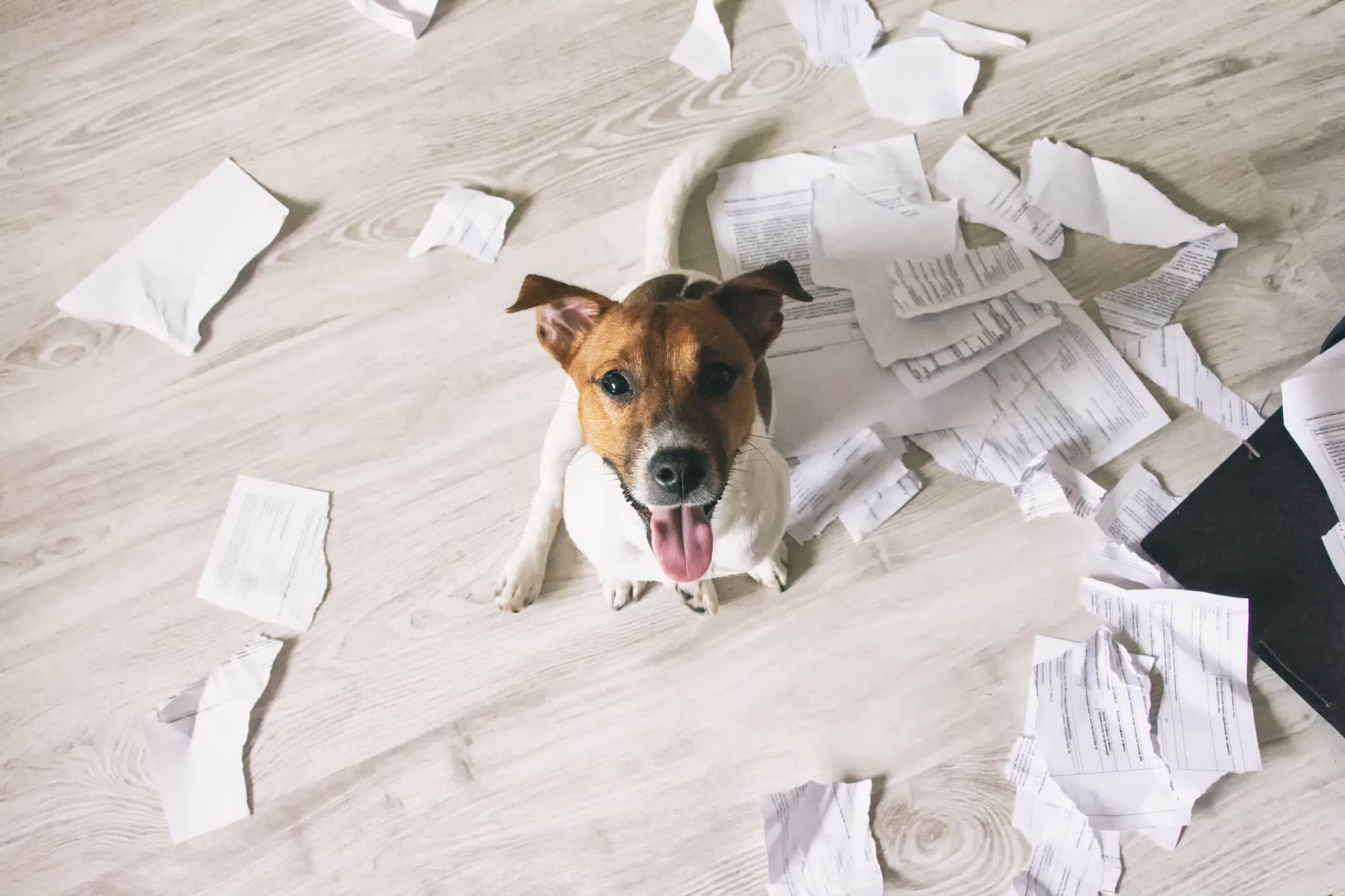 Dog chewed up paper